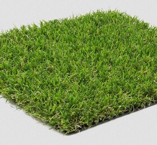 evergreen_grass